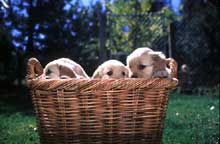 BASKET FULL OF MISCHIEF